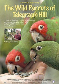 The Wild Parrots of Telegraph Hill